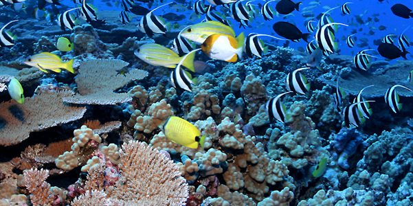 oceani giornata mondiale info