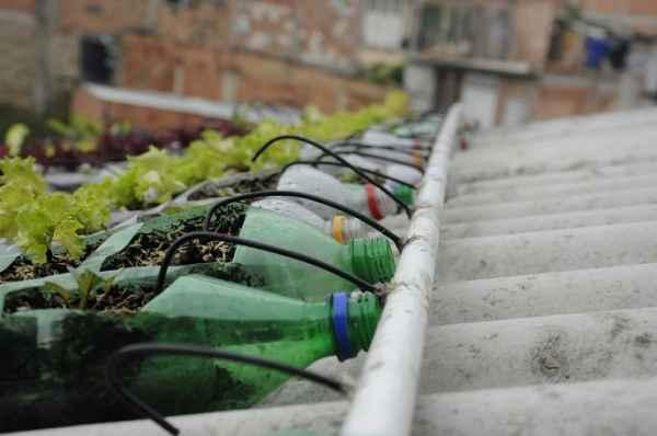 tetto verde bottiglie 2