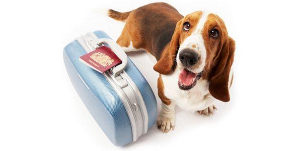 vacanze animali veterinario