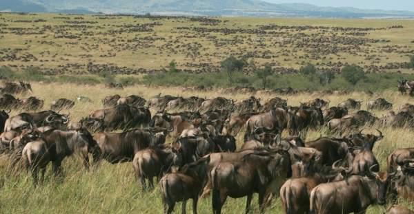 7. Maasai Mara
