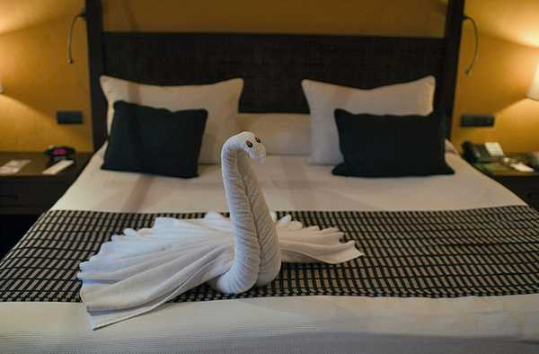 animaletti asciugamani 8