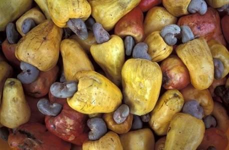 b2ap3_thumbnail_cashew-fruit.jpg