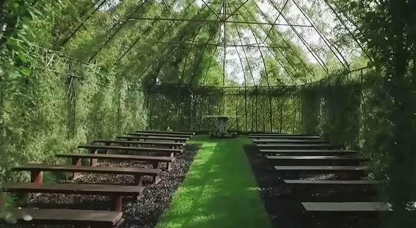chiesa albero 3