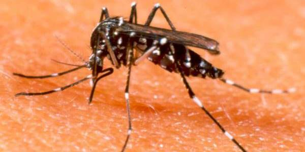 dengue bologna