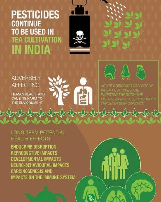 greenpeace pesticidi te india