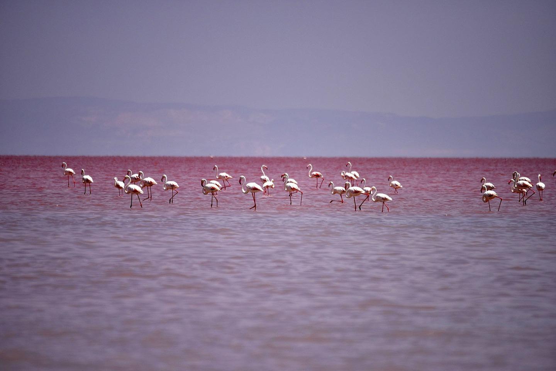 lago rosso3