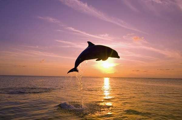 animali intelligenti 1 delfini