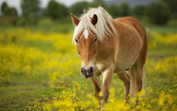animali intelligenti 4 cavalli