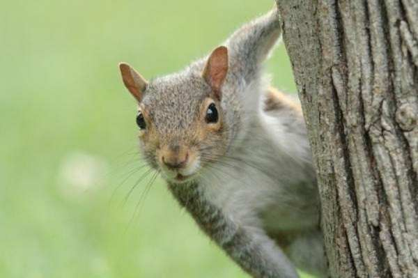 animali intelligenti 9 scoiattoli