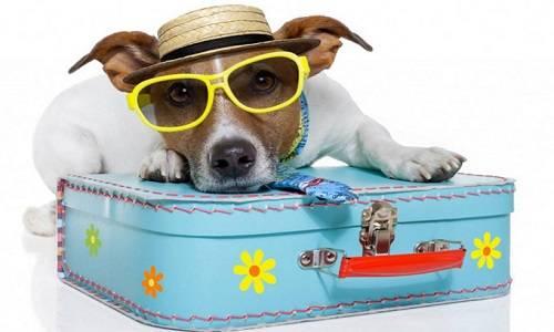 b2ap3_thumbnail_vacanze-cani.jpg