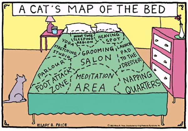 6. fumetti gatto