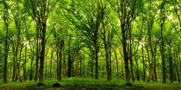 alberi3tn