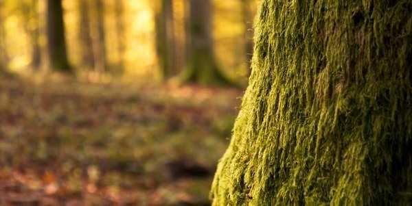alberi deforestazione fao