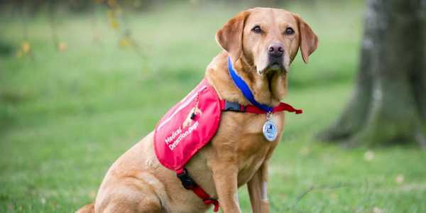 cani annusa tumori medical detetction dogs