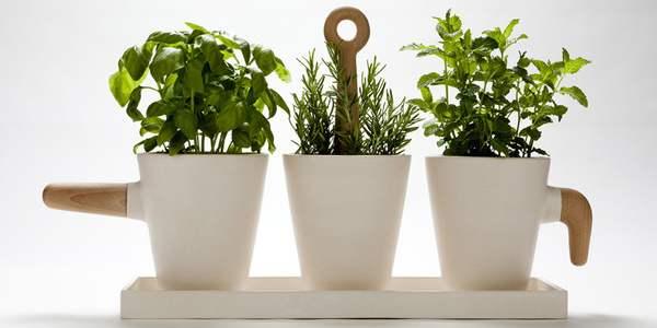 coltivare orto in casa