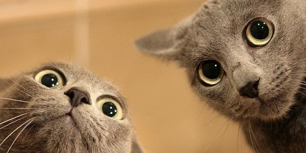 gattiIllustrazioni