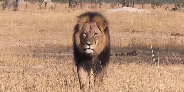 leone cecil walter palmer