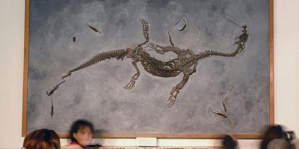 museodeifossili buehne