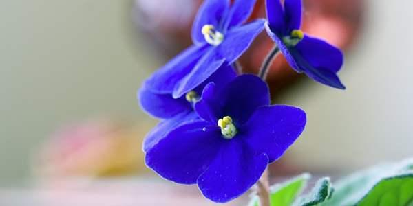 piante facili da coltivare