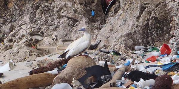 uccellimarini plastica