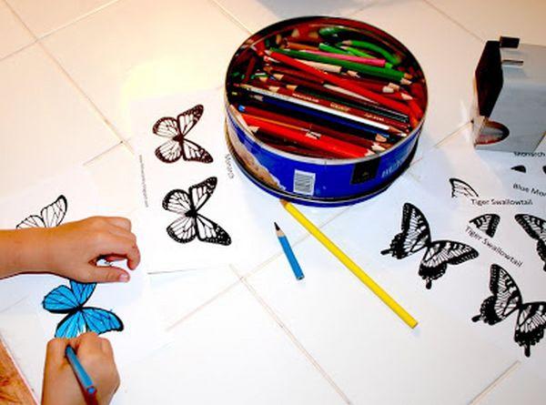 ali farfalla 1