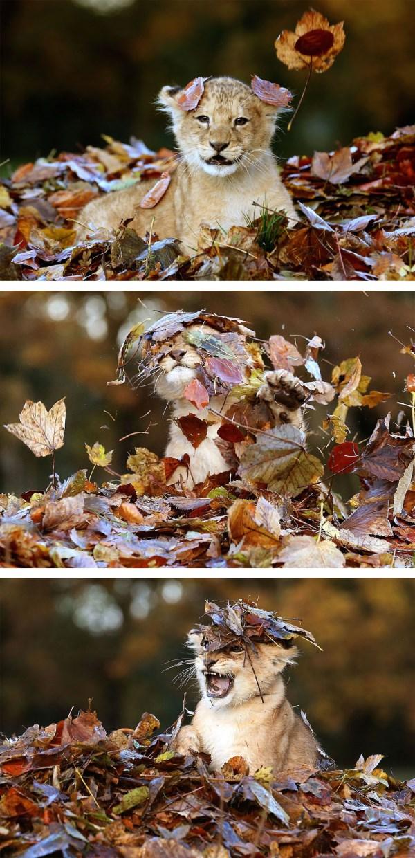 animali autunno1