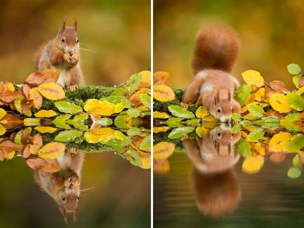 animali autunno10