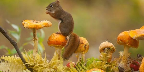 animali autunno12