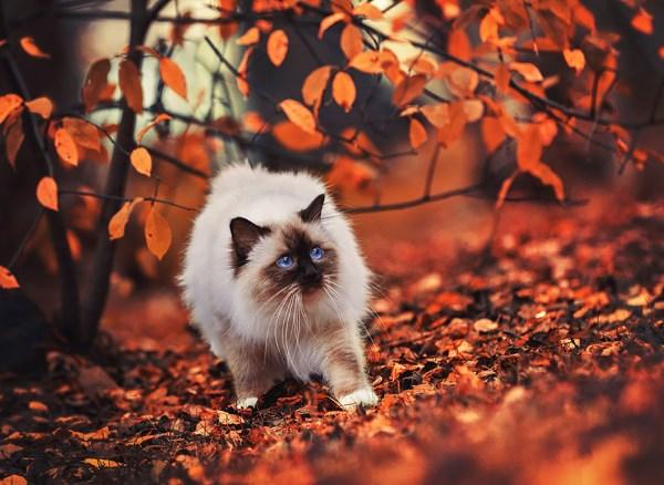 animali autunno13