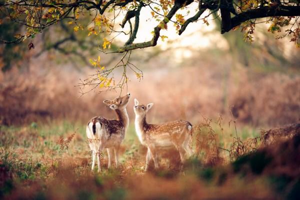 animali autunno14