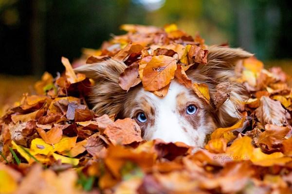 animali autunno15