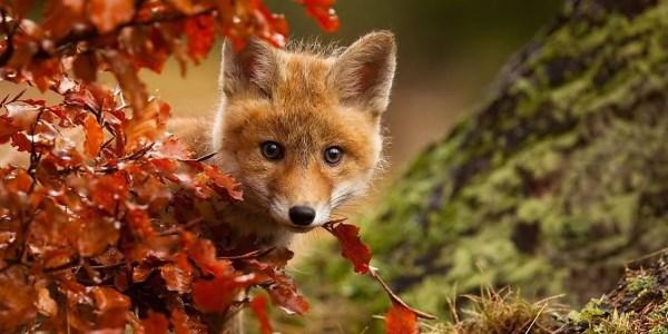 animali autunno3