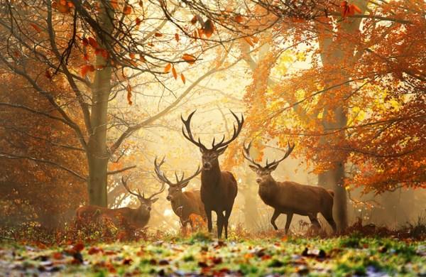 animali autunno4