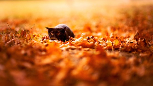 animali autunno7