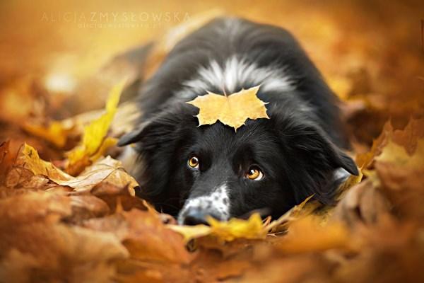 animali autunno8