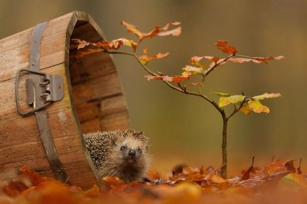animali autunno9