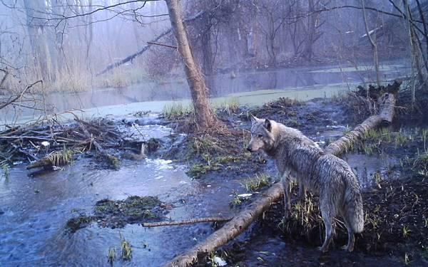 animali chernobyl 3