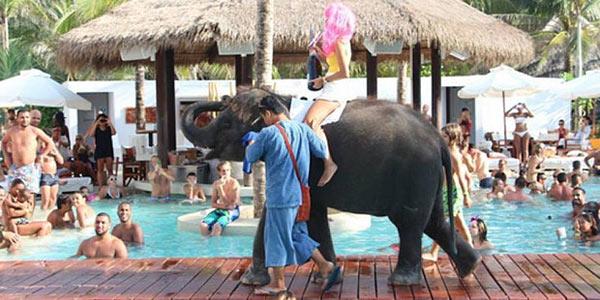 elefanti thai1