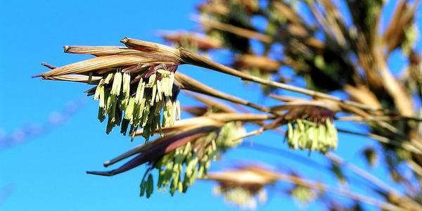 fioritura bambu cover