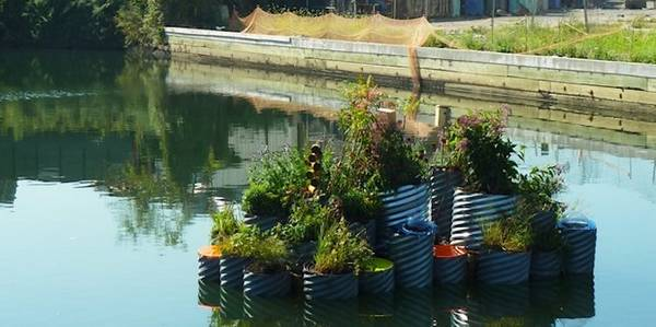 floating garden 1