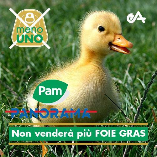 foie gras panorama