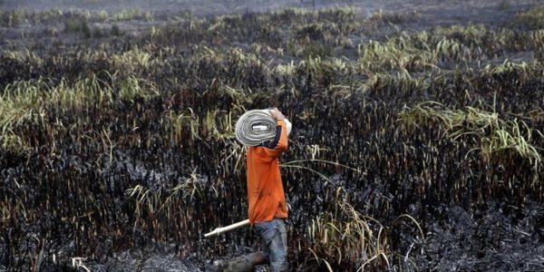 indonesia deforestazione clima