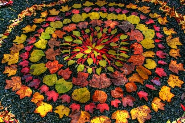 mandala foglie 2