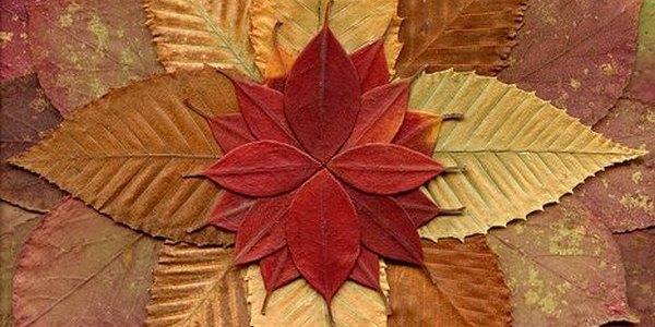mandala foglie cover