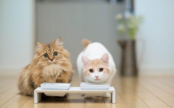 miti gatti 2