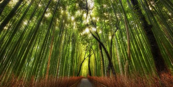 sagano bamboo forest grove arashiyama kyoto japan