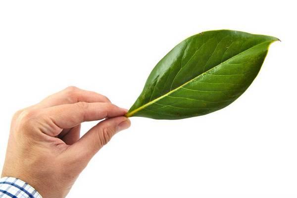 skelton leaf 2