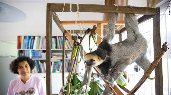 sloth lady 00