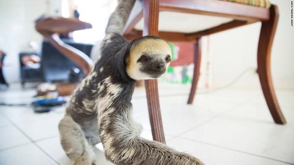 sloth lady 02