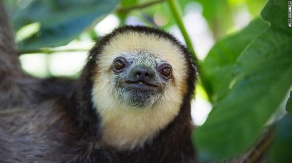 sloth lady 05